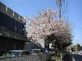 20100408-1