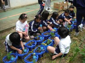 自分の植木鉢に苗を植える子どもたち