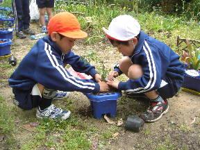 担任の先生の苗を協力して植える子どもたち