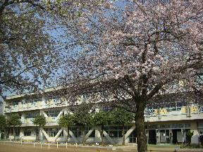 新館校舎と満開の桜\