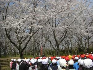 満開の桜の下 児童会長の話を聞く子どもたち(9:30)