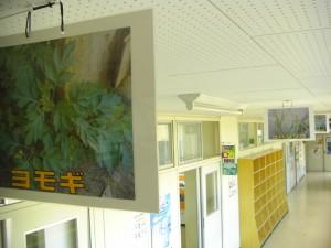 本校で見ることができる植物の写真です。(8:30)