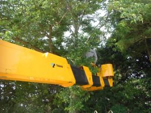 高所の枝を切っています。(7:50)