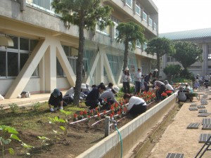 サルビアの苗を植えています(7:35)