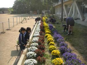 ビオラの花が満開の花壇の手入れを行う飼育・園芸委員会の子どもたち(15:30)