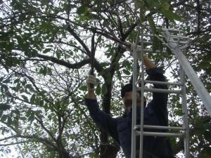 高所の枝の伐採作業(7:55)