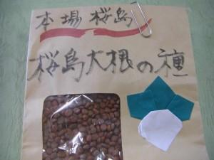 桜島ダイコンの種 直径は約1mmです。\\