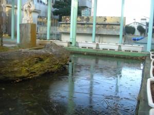 校長室前の池は,一面氷がはっています。(7:40)