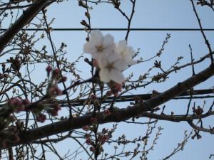 みごとに 咲きました!(16:25)