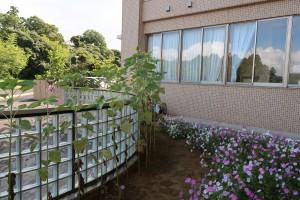 正門の方では向日葵が咲いていました。\\