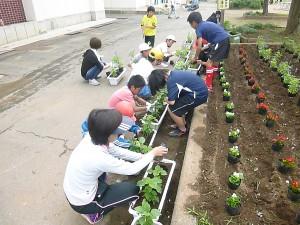 児童は,学校花壇の苗植えから始めました。\\