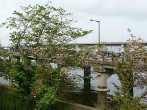 ランチルームからの眺め:新緑の季節  神宮橋\