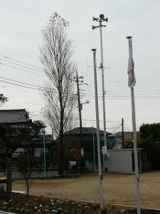 シンボルの木(ポプラ)\