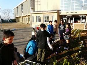 朝の奉仕活動 1・2年生と5年生 花壇の草抜き作業
