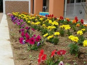 みんなで植えた花の苗も大きくなってきました。\\