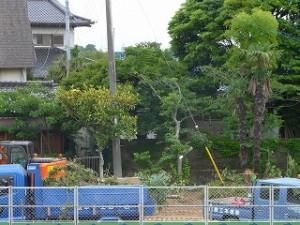 グラウンド周辺の樹木の移植、枝払い作業です。\