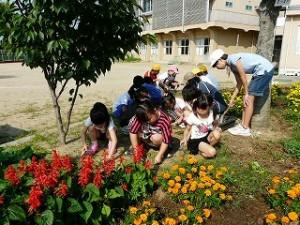 花壇の草抜き 奉仕活動 6年生と1年生\