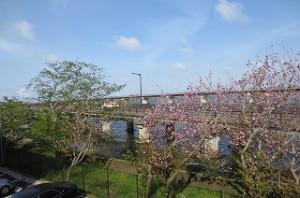 校歌に「神宮橋を長くひく」とあります。全校朝会の場所から撮った茨城百景の一つです。\