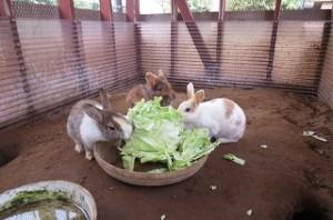 勇ましい剣道の後に,本校のウサギを紹介します。「モコとチョコと???」です。春キャベツを夢中で食べています。「かわいいですね。」\\