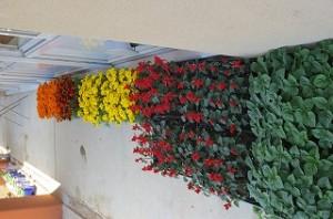 月曜日の業間に花を植えます。\