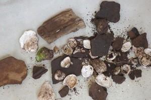 この写真には,「はまぐり・赤貝・サザエ・牡蠣」が写っています。6000年前の人々が食した物です。また,縄文土器や石器らしき物も見つけました。田谷貝塚に行き,落ち葉をどけると出てきた物達です。\