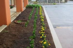 子ども達の植えてくれた花がしっかり根付きました。\