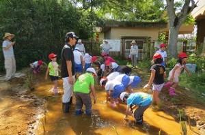子ども達は楽しそうに池に入り,ビオトープを完成させました。\
