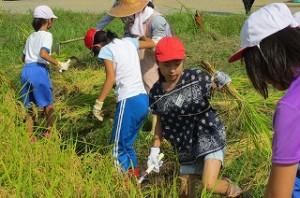 稲刈り体験。貴重な体験をしました。\\