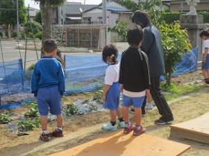 1年生がサツマイモの苗に水をやってます。\\
