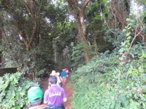うっそうとした木々の間の坂道を降りていきました。\