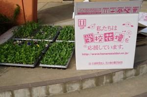 「花と緑の農芸財団」さんから頂きました。大切に育てます。ありがとうございました。\