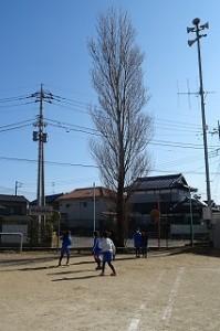 3年生女子が豊津小のシンボル,ポプラの木の下で遊んでいます。なにやら遊びが変わったようです。\