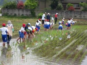 水田の端をお借りして、稲の苗植えをしました。\\\\\
